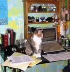 Moggie the Velcro Cat